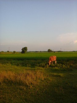 Border village to Bangladesh