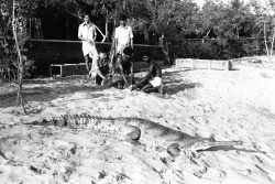 Early days of Croc Bank!