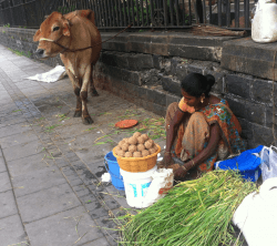 The owner of the cow rolling laddoos.