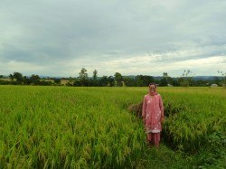 A local farmer with her paddy fields