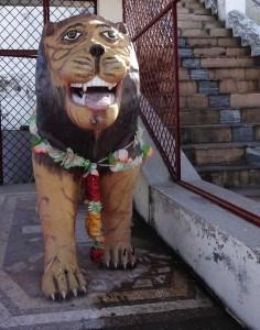 A tiger's welcome | Tehri Gharwal, Uttarakhand state