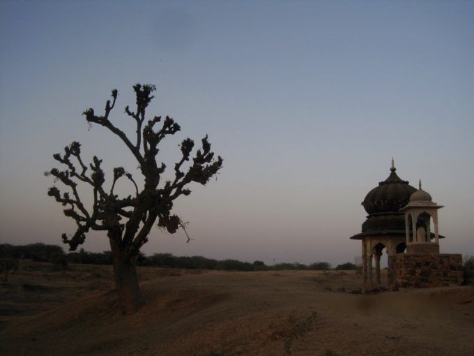 My Christmas tree (The Khejri tree) in Kotri village