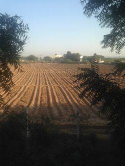 Countryside of Kutch