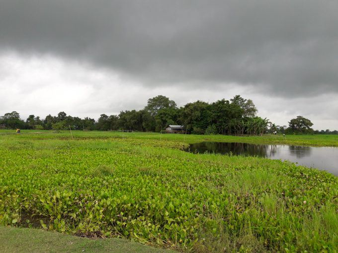 Glimpse of the green surrounding in Majuli