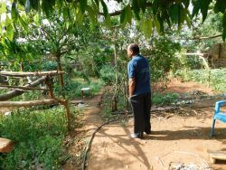 Picture 5– Binduji in his kitchen garden in Semiliguda, Orissa