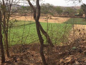 Farmland in Sendhwa, Madhya Pradesh