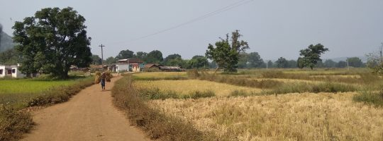 Paddy fields around one of the village in Nuapada Block