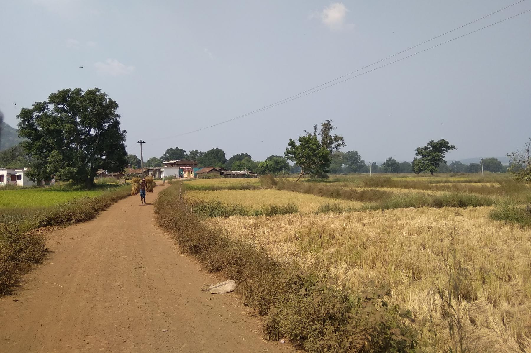 Paddy fields around one of the village in Nuapada Block
