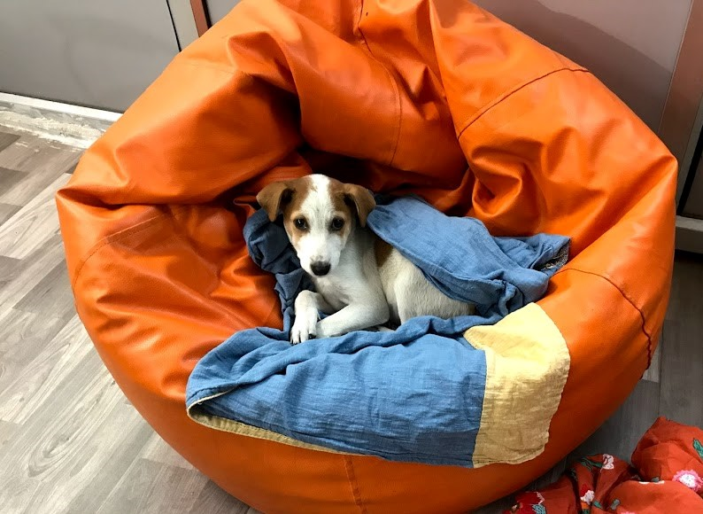 Stanley chilling in a bean bag.