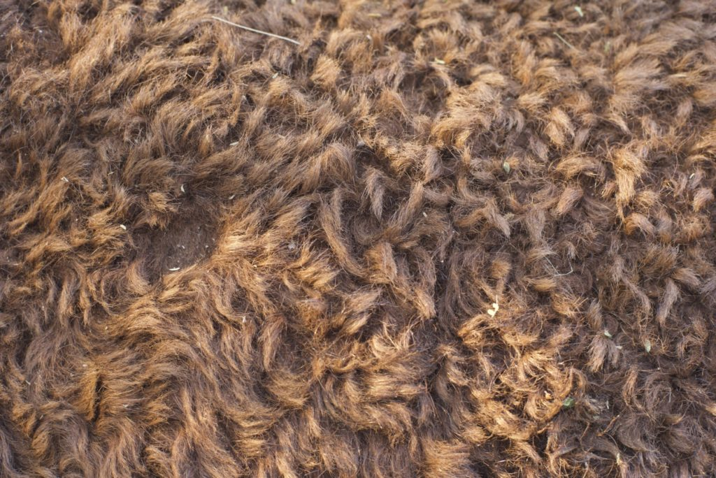 sheep hair