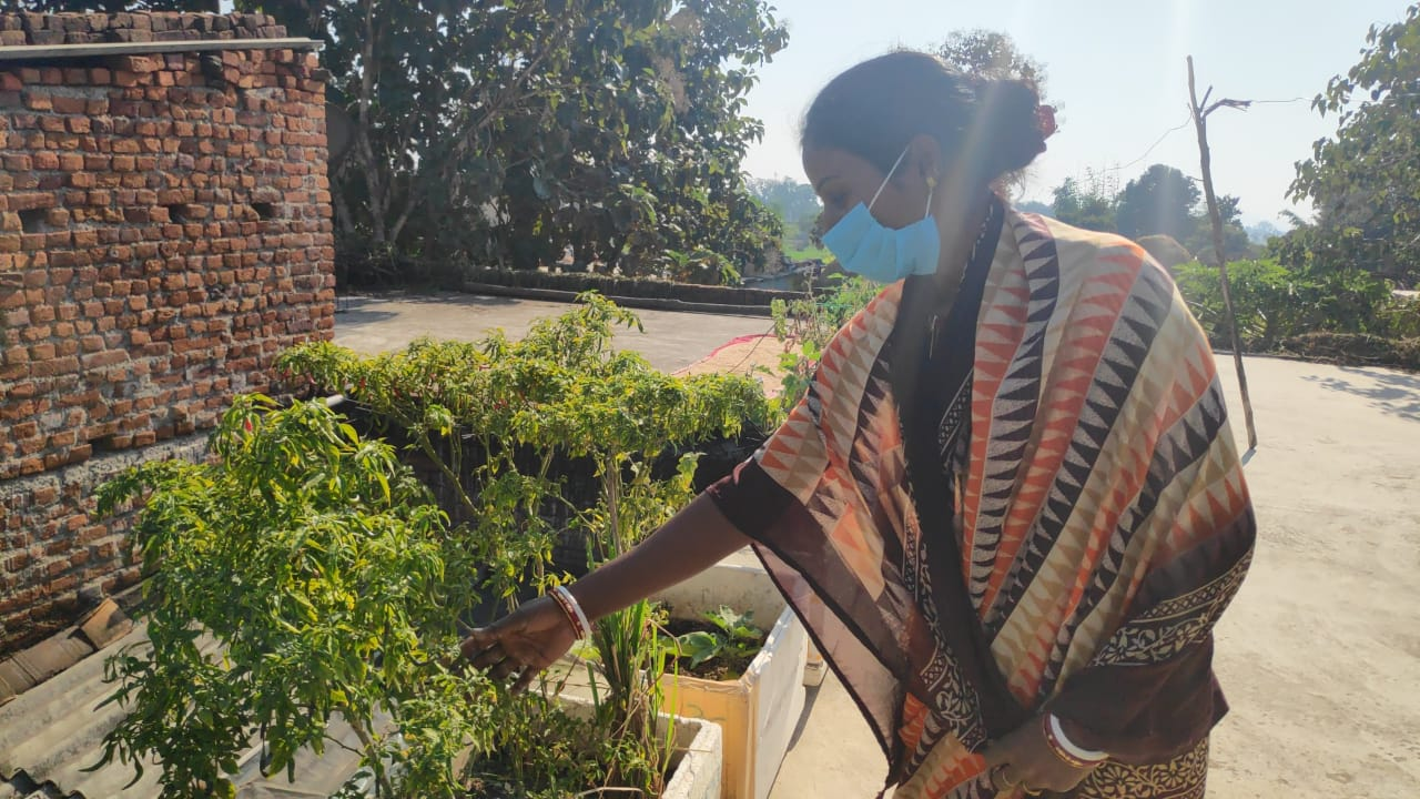 Gudia Devi showing sack farming model in the Terrance of her house.