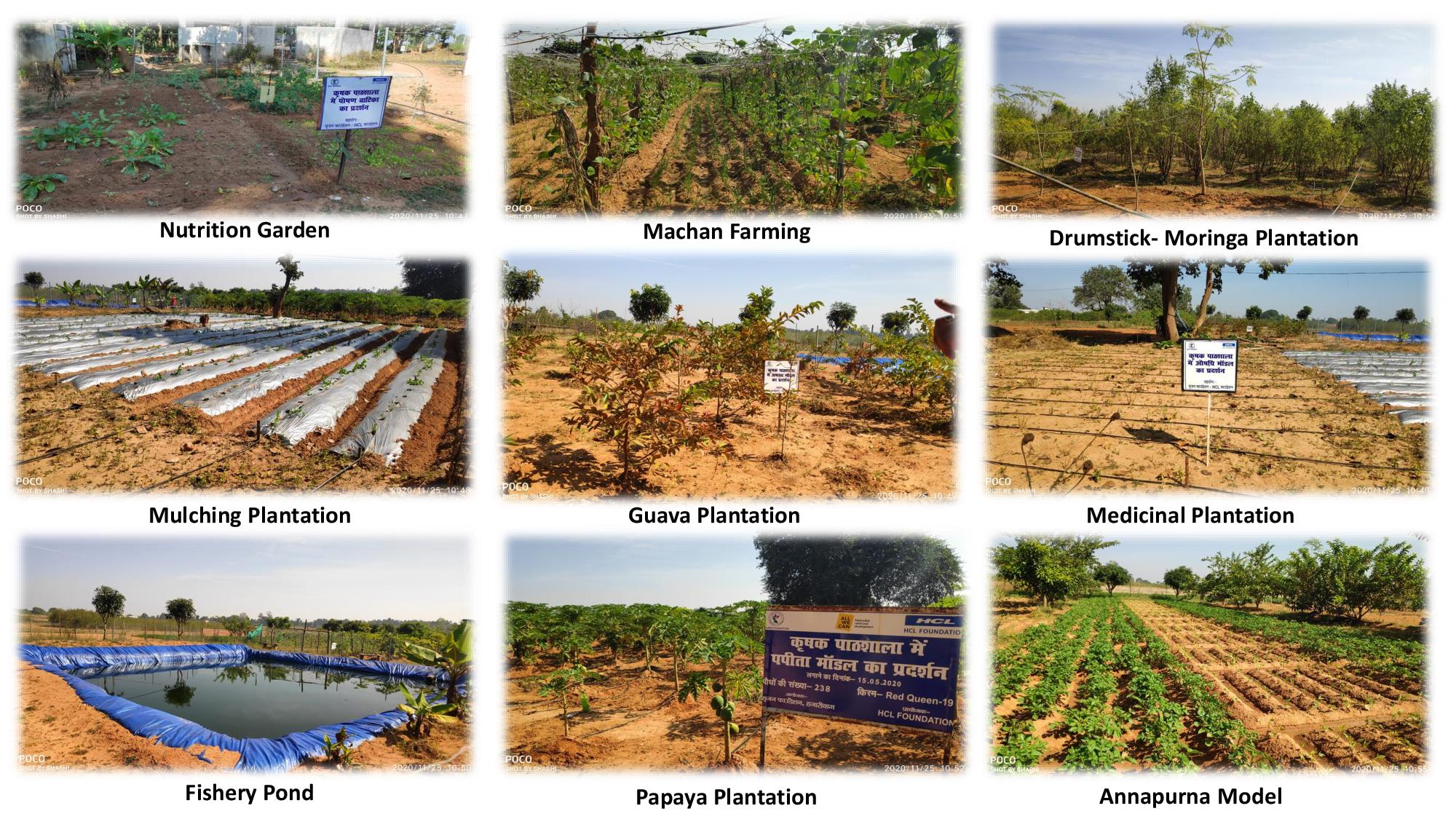 Some models of organic farming practice for demonstration in Farmers Field School in Khaira, Hazaribag.